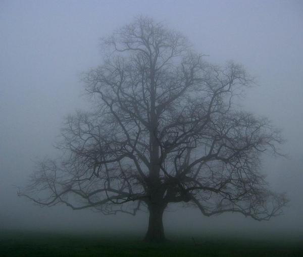 mist_the_oak_tree_600